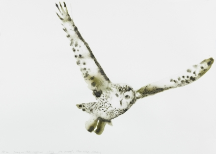 Alexis Rockman, Snowy Owl (JFK Short-term Parking, Queens) (2016), via Salon 94