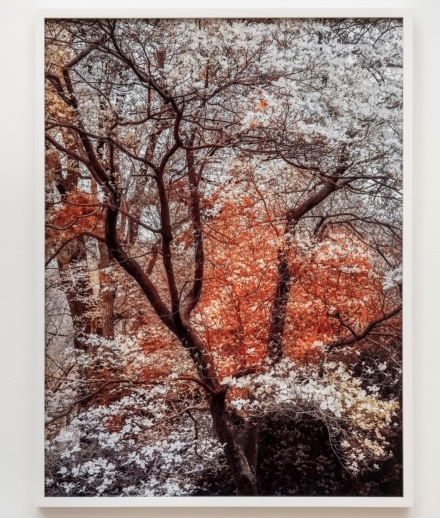 Trevor Paglen, Bloom (#79655d) (2020), via Pace